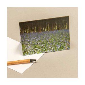 Greeting Card Bluebells Woods