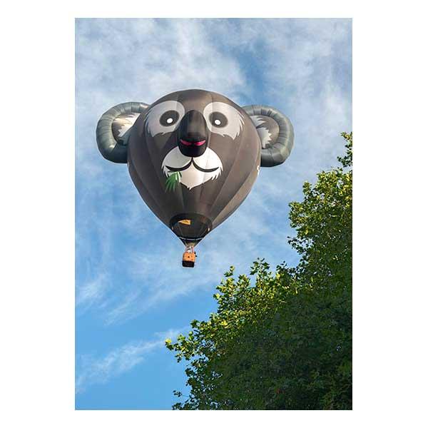 Koala Hot Air Balloon Flying